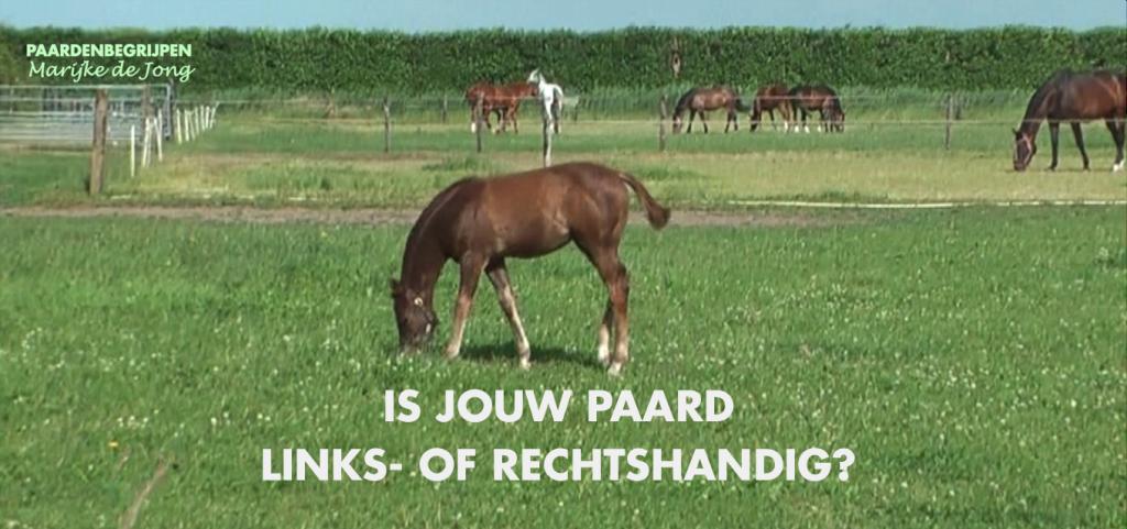 is-je-paard-rechts-of-linkshandig