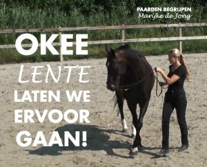 okay-spring-nl